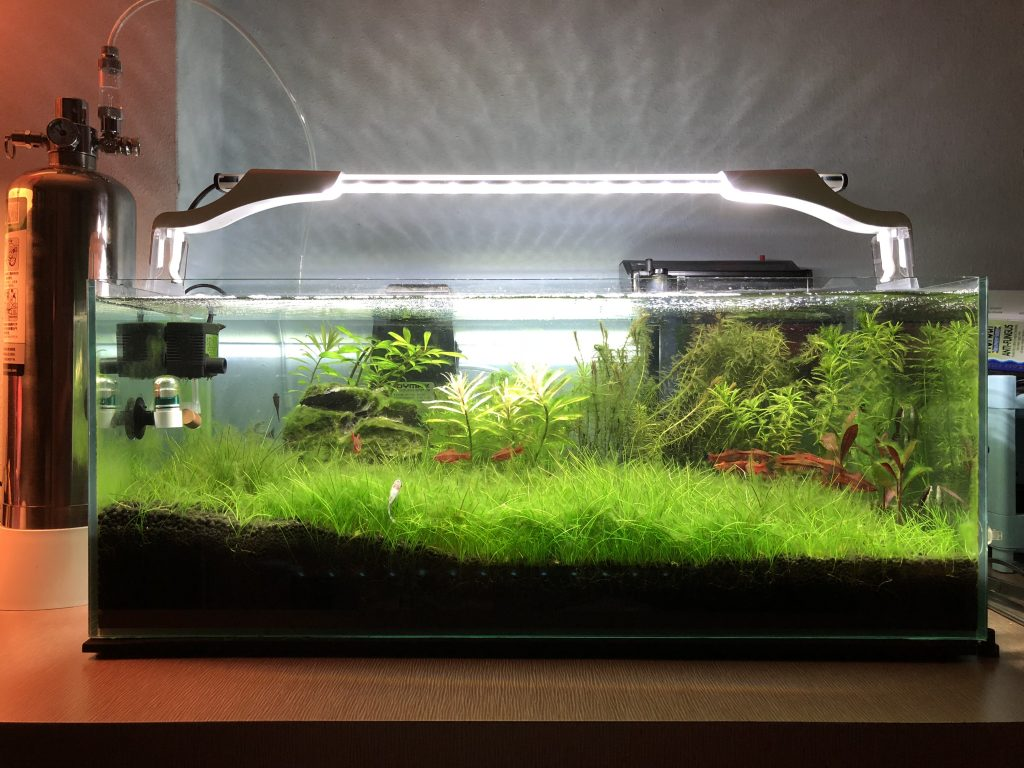 growing dwarf hairgrass with diy co2