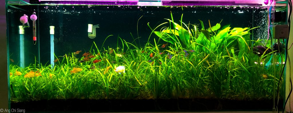 75 gallon grass jungle aquarium with DIY CO2.